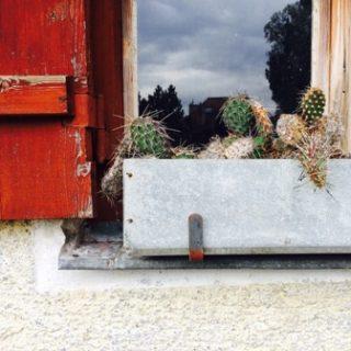 private cactus area